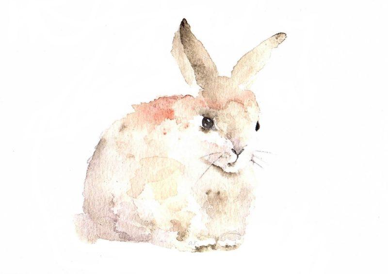 Kanin FINAL 2 800x565 - Alles neu für Kanin